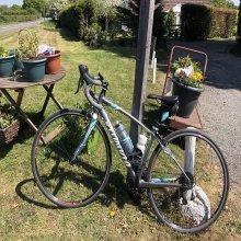 Dayle Bike